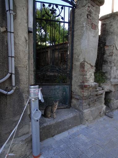 017・7月13日・「門と猫」・510.jpg