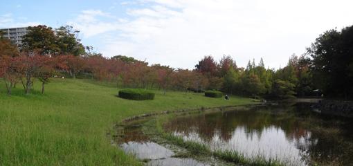 008・10月24日「台風後の池」・510.JPG